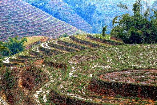 Vietnam, North Vietnam, Landscape, Rice Fields