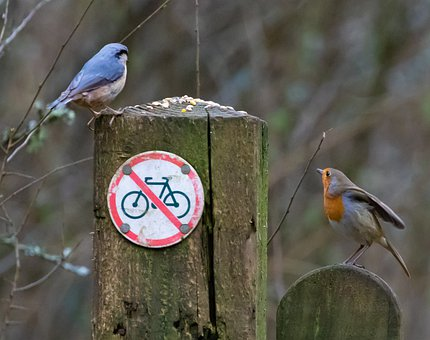 Nuthatch, Robin, Blue, Tree Bird, Orange