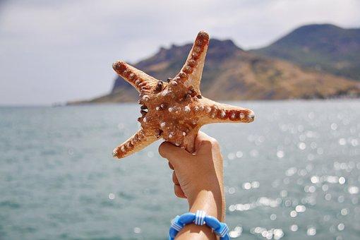 Starfish, Hand, Sea, Mountain, Beach, Arm, Bracelet