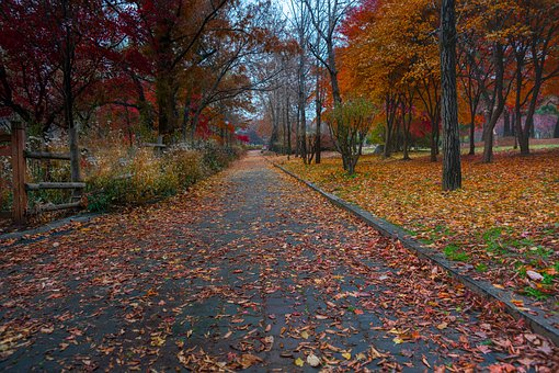 Autumn Path, Fall, Leaves, Lonely, Nature, Trees