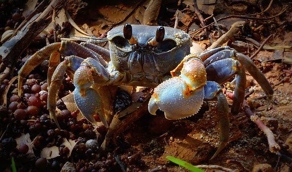 Crab, Beach, Sea, Mauritius, Water, Sand, Vacations