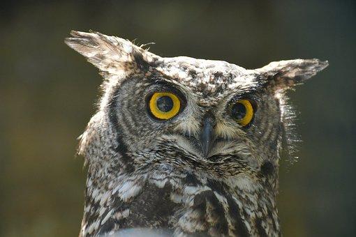 Owl, Barn Owl, Bird Of Prey, Falconry, Night, Bird