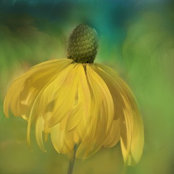 Nature, Landscape, Flower, Blossom, Bloom, Coneflower