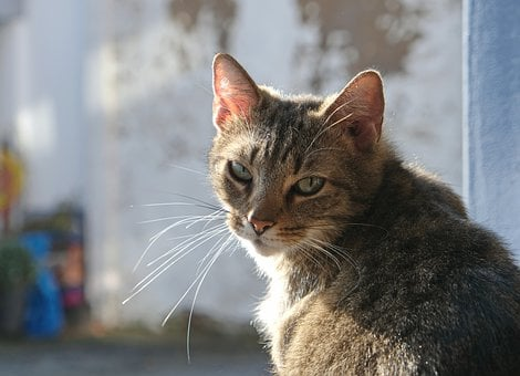 Cat, Tiger, Grey, Close Up, Unapproachable, Moody