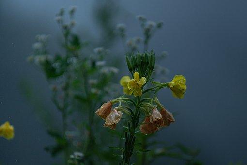 Mist, Fog, Early Morning, Wildflower