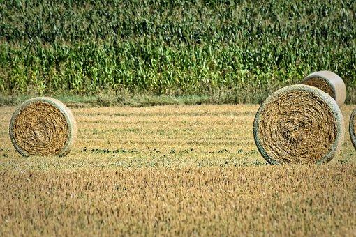 Hay Bales, Landscape, Farm, Rural, Field