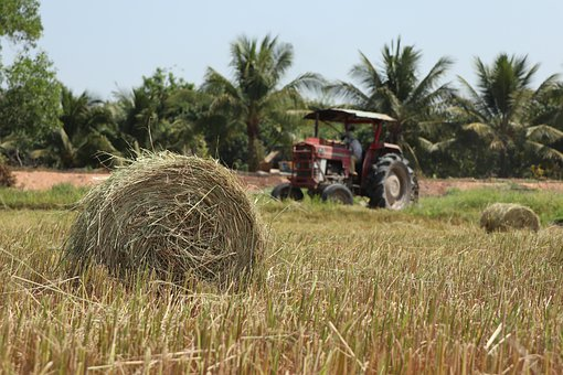Tractor In The Rice Field, Farmer, Harvest, Work Hard