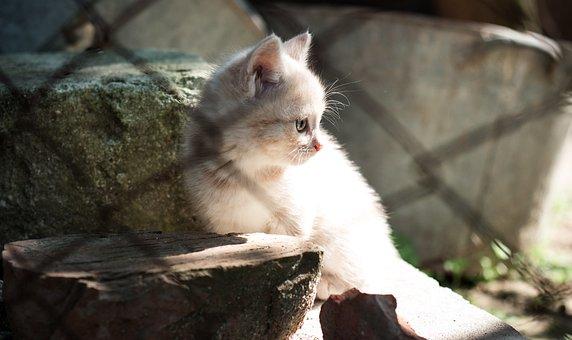 Cat, Tree, Landscape, Animals, House, Nature, Pet