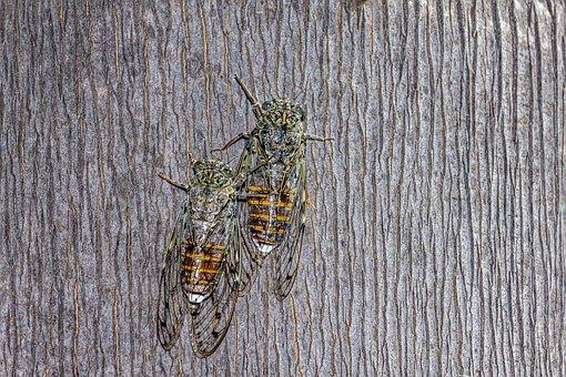 Cicada, Tree, Summer, Insect, Closeup, Nature, Bug