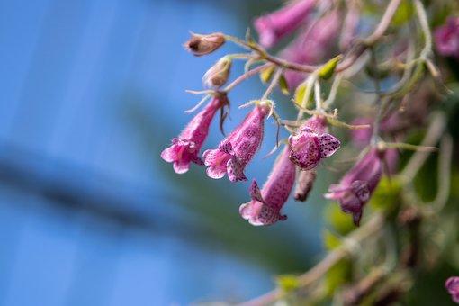 Flower, Purple, Bells, Bloom, Blossom, Nature, Spring