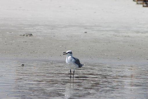 Ocean, Bird, Beach, Sea, Seagull, Water