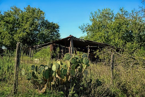 Texas, Scenic, Landscape, Countryside, Shed, Cactus