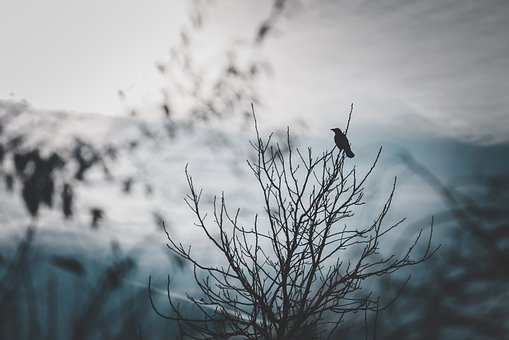 Raven, Bird, Branches, Tree, Moody, Scenery