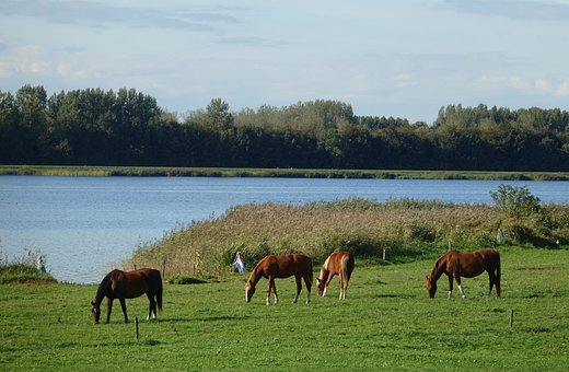 Horse, Animal, Water, Horses, More, Browser