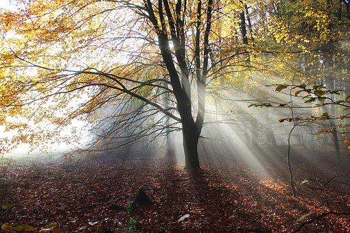 Autumn Forest, Fog, Backlighting