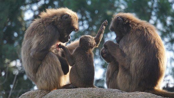 Family, Background, Ape, Children, Parents