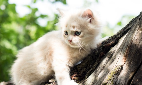 Cat, Tree, Landscape, Animals, House