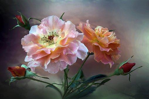 Flower, Flowers, Nature, Autumn, Summer, Color, Colors