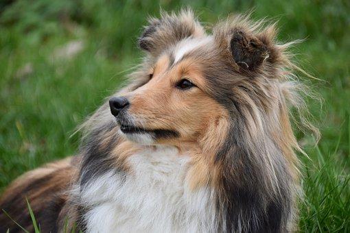 Dog, Bitch, Portrait Profile Of A Dog