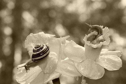 Wstężyk Huntsman, Molluscs, Flowers, The Petals, Cup