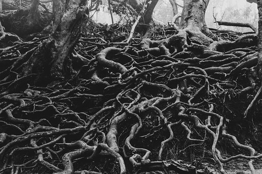 Creepy, Woods, Scary, Fantasy, Forest