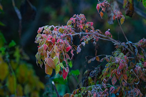 Winter, Tree, Cold, Color, Leaves, Frost, Frozen