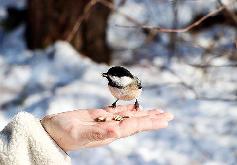 Tit, Bird, Hand, Seeds, Nature, Animals, Hold, Spring
