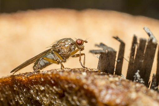 Fly, Compound, Big, Eyes, Herb, Leaf, Blurry, Small