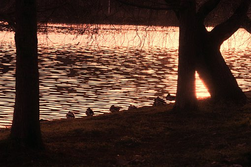 Silhouettes, Ducks, Birds, Sitting, Edge, Lake, Winter