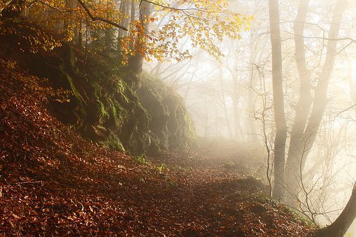 Autumn, Autumn Forest, Fog, Morning Mist, Nature