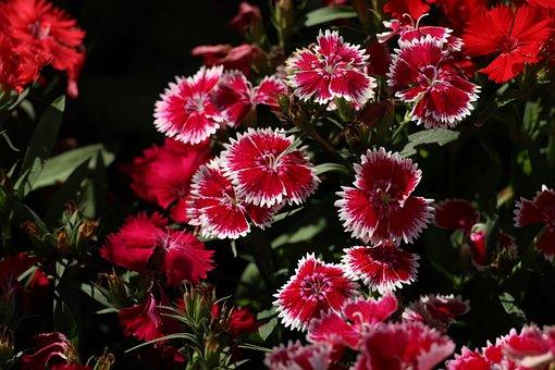 Flowers, Afternoon, Da Lat, Vietnam, Nature