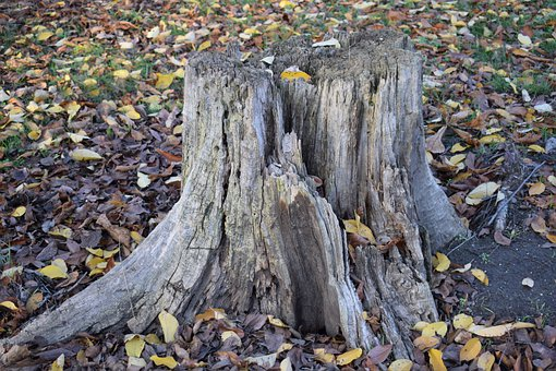 Stump, Park, Nature, Trees, Landscape