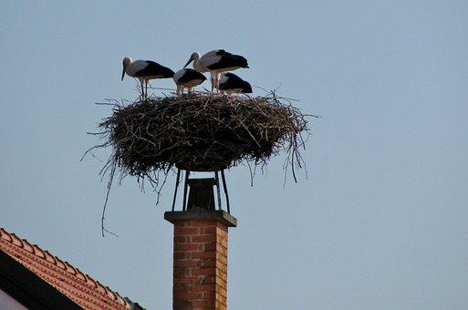 Nature, Animal World, White Stork, Nest, Young