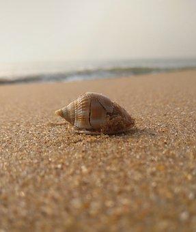 Shell, Seashells, Sand, Beach, Seahorse, Sea, Seaside