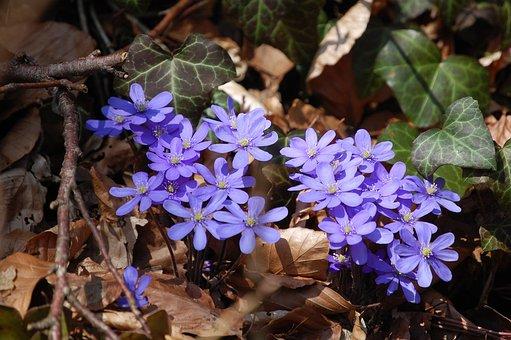 Spring, The Beginning Of Spring, Flower