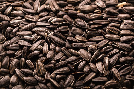 Sunflower, Roasted, Seed, Food, Agriculture, Snack