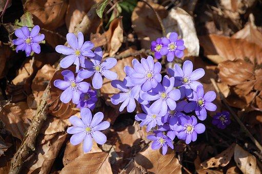 Spring, The Beginning Of Spring, Flower, Plant, Blossom