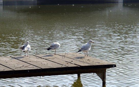 Birds, Seagulls, Sitting, The Platform, Above