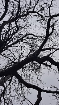 Tree, Winter, Nature, Wintry, Cold, Sky
