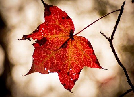 Fall, Warming, Leaf, Autumn, Calm