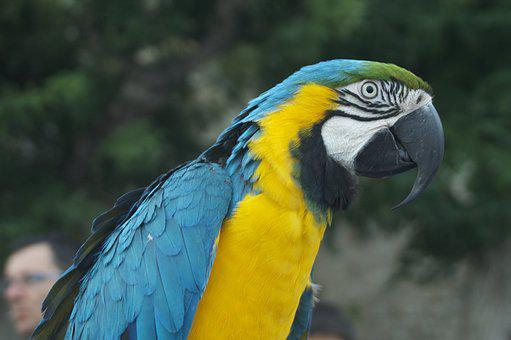Parrot, Bird, Animal, Color, Fauna, Colorful, Exotic