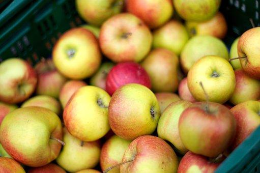 Thanksgiving, Apple, Fruit, Frisch, Autumn, Healthy