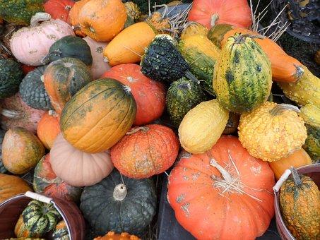 Pumpkin, Gourd, Autumn, Holiday, Season, Fall
