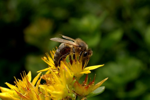 Bee, Insect, Pollination, Garden, Work, Nature, Flower