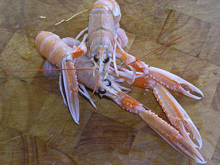 Norway Lobster, Dining, Seafood, Delicacy, Food