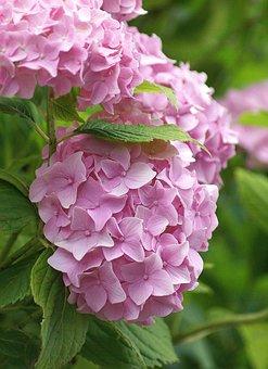 Flower, Georgia, A Flower Garden, Garden
