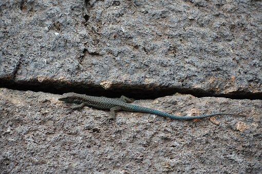 Summer, Madeira, Portugal, Lizard, Landscape, Beautiful