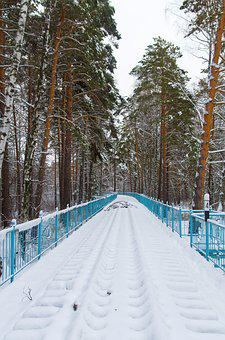 Snow, Railway, Pine, Park, Tree, Forest