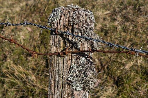 Post, Closing, Pastures, Lichen, Barbed Wire