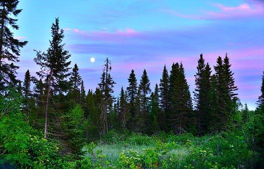 Landscape, Nature, Trees, Clouds, Fir, Coniferous